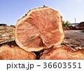 杉 丸太 木材の写真 36603551