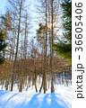 冬 木立 自然の写真 36605406