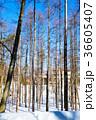 冬 木立 自然の写真 36605407