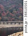 嵐山 渡月橋 紅葉の写真 36610501
