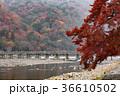 嵐山 渡月橋 紅葉の写真 36610502
