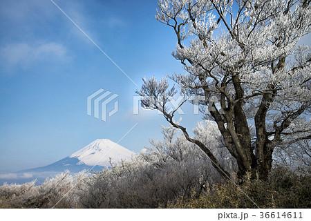 箱根 芦ノ湖スカイライン山伏峠展望台から 36614611