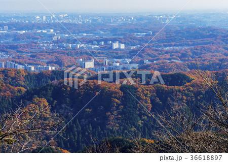 高尾山の秋 36618897