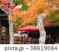 箱根美術館 紅葉 秋の写真 36619084