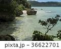 サビチ洞 石垣島 海岸の写真 36622701