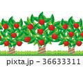 りんご 36633311