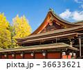 北野天満宮 銀杏 神社の写真 36633621