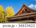 北野天満宮 銀杏 神社の写真 36633622