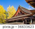北野天満宮 銀杏 神社の写真 36633623
