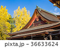 北野天満宮 銀杏 神社の写真 36633624