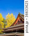 北野天満宮 銀杏 神社の写真 36633625