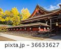 北野天満宮 銀杏 神社の写真 36633627