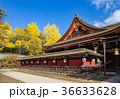 北野天満宮 銀杏 神社の写真 36633628