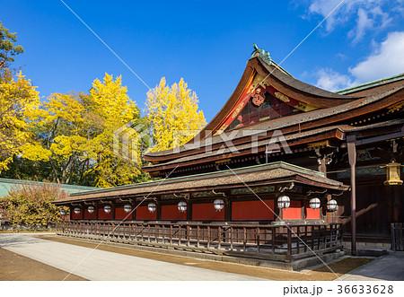 北野天満宮 - 銀杏 36633628