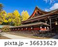 北野天満宮 銀杏 神社の写真 36633629