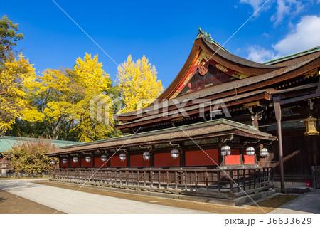 北野天満宮 - 銀杏 36633629