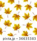 紅葉 あき 秋のイラスト 36635383