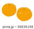 みかん 水彩画 36636198
