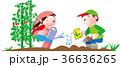 家庭菜園で野菜を作る子供達 36636265