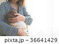 あかちゃん 36641429