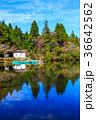 白雲の池 池 秋の写真 36642562