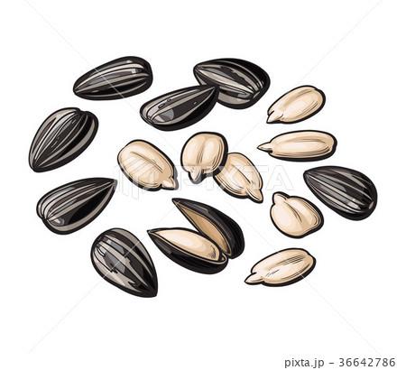Whole and peeled sunflower seeds isolated on white 36642786