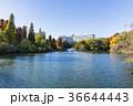 秋の井の頭公園 36644443