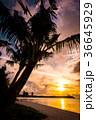 グアム タモンビーチの夕景 36645929