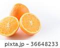 ネーブルオレンジ 36648233
