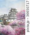 城と桜 姫路城 桜 手書き 36650717