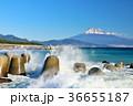 静岡県 青空と海の波しぶき そして富士山 36655187