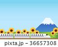 旅行 36657308