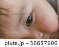 目 子供 アップの写真 36657906