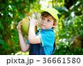 Happy funny little preschool kid boy holding huge 36661580