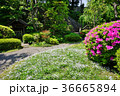 春の庭園 36665894