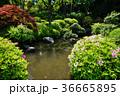 春の庭園 36665895
