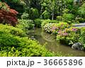 春の庭園 36665896