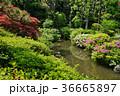 春の庭園 36665897