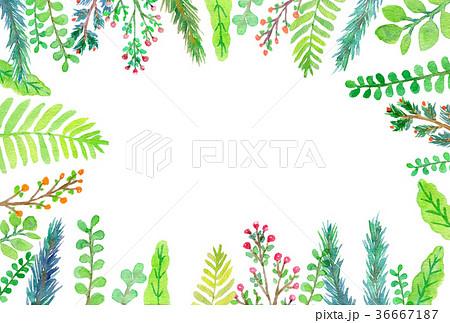 植物 水彩イラストのイラスト素材 36667187 Pixta