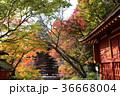 談山神社 紅葉 十三重塔の写真 36668004