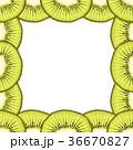 ベクター フレーム キウイのイラスト 36670827