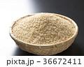 米 玄米 穀物の写真 36672411