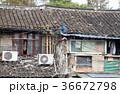 中国、上海近郊の水郷、七宝の街並み 36672798