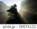 光線 朝陽 霧の写真 36674122