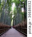 バンブー 木立性 日本の写真 36686032