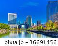 東京 皇居周辺の風景(日比谷濠) 36691456