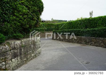 西郷どんロケ地(知覧武家屋敷の石垣と石畳) 36692760