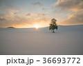 北海道 美瑛 雪景色の写真 36693772