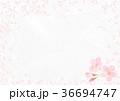 背景素材_桜 36694747