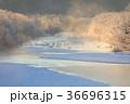 北海道 鶴居村 タンチョウの写真 36696315